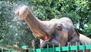 Подорож в Одеський зоопарк