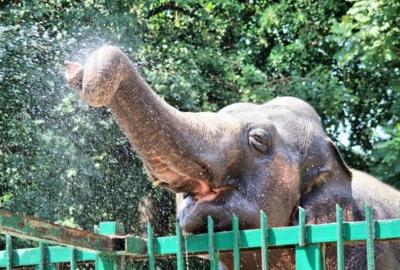 Путешествие в Одесский зоопарк
