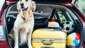 Правила перевозки животных в авто